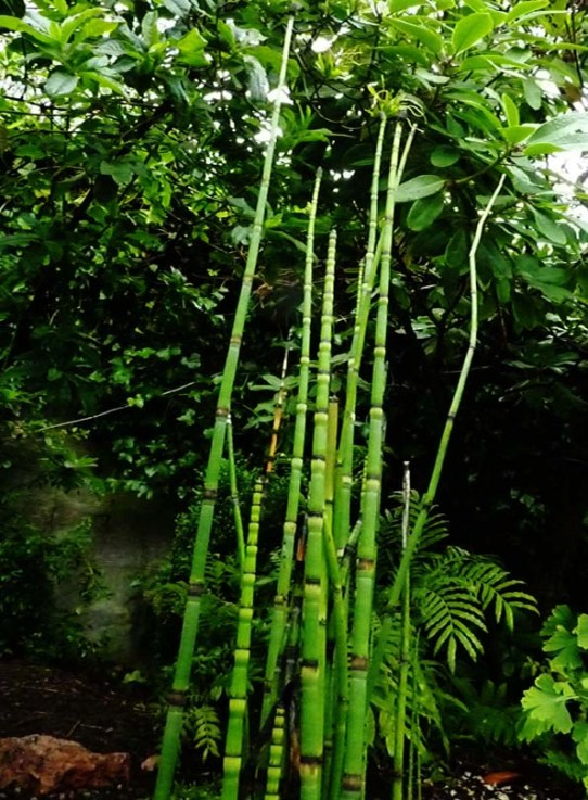 Rare plants in Tom Smith's garden.