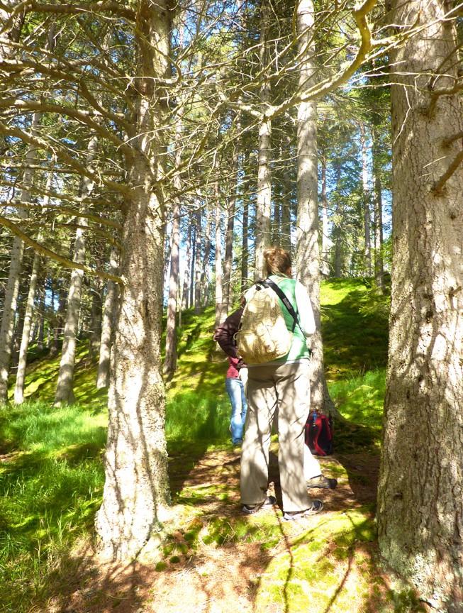 Tree walk at Linn of Dee.