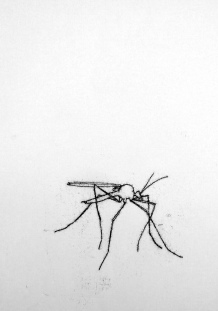 Cranefly. Ink. Monotype. 60cm x 42cm. £400.