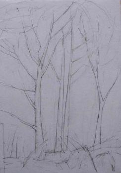 Cove Park trees. Pencil. 30cm x 21cm