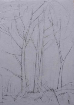 Cove Park trees. Pencil. 30cm x 21cm