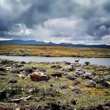 Bale-Mountains-Sanetti-Plateau-nyala-clouds-4000m-Sera-James-Irvine