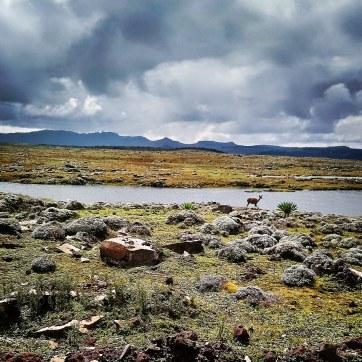 Bale-Mountains-Sanetti-Plateau-nyala-clouds-4000m-Sera-James-Irvine