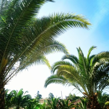 palm-trees-ethiopia-sera-james-irvine