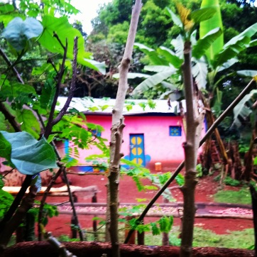 pink-house-forest-ethiopia-coffee-village-sera-james-irvine