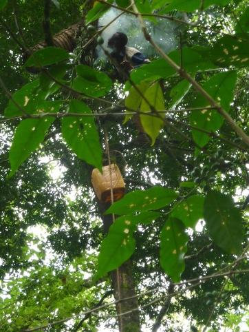 Sera-JamesI-rvine_Bees_forest_coffee_bale-mountains